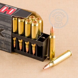 A photograph detailing the 5.56x45mm ammo with FMJ bullets made by Hornady.