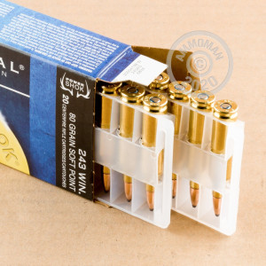 A photograph detailing the 243 Winchester ammo with soft point bullets made by Federal.